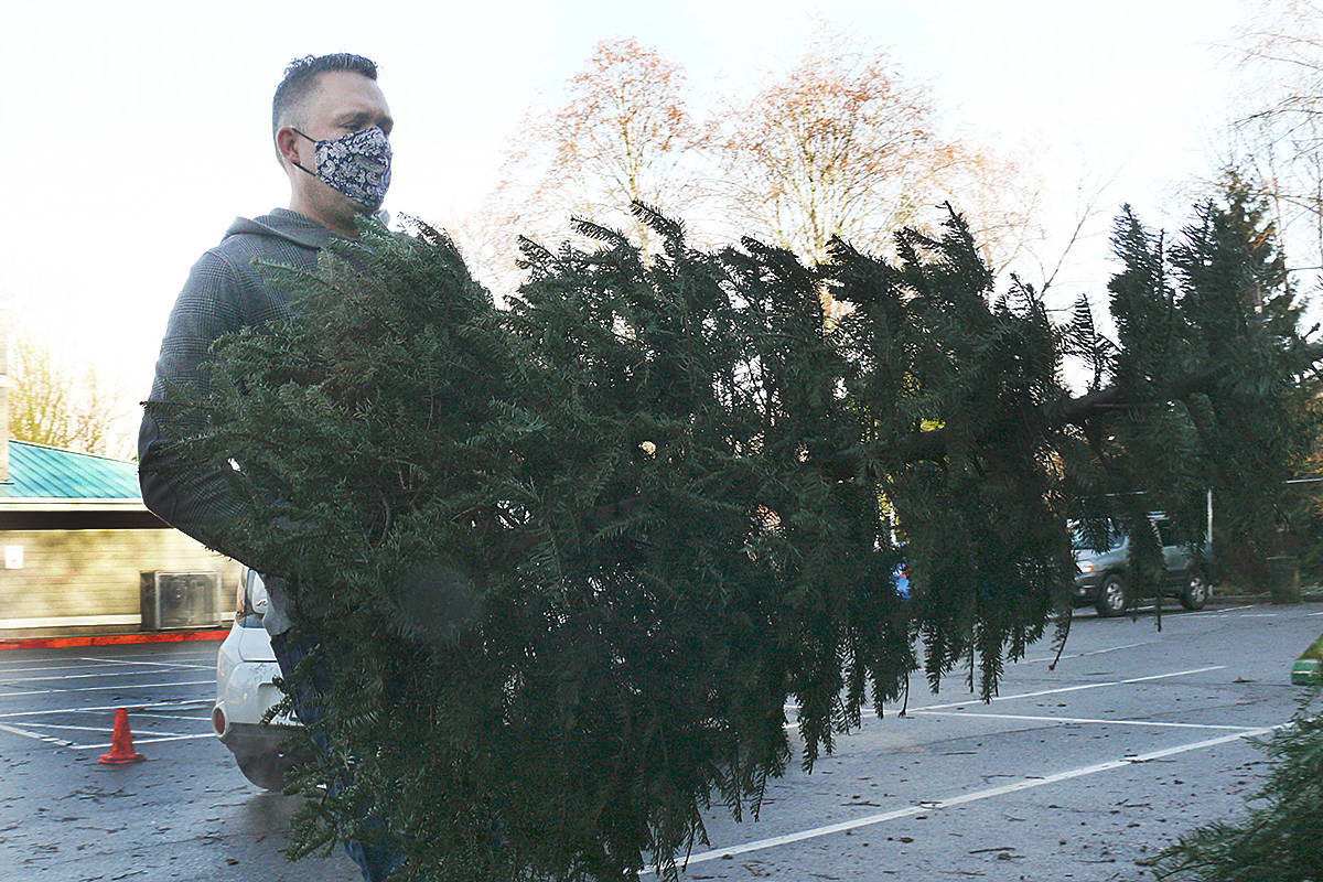 Adam Murphy, vice-chair of the Langley Senior Resources Society board of directors, was unloading trees from vehicles as they pulled in Saturday, Jan. 9, for the centre's first Christmas tree chipping fundraiser. (Dan Ferguson/Langley Advance Times)