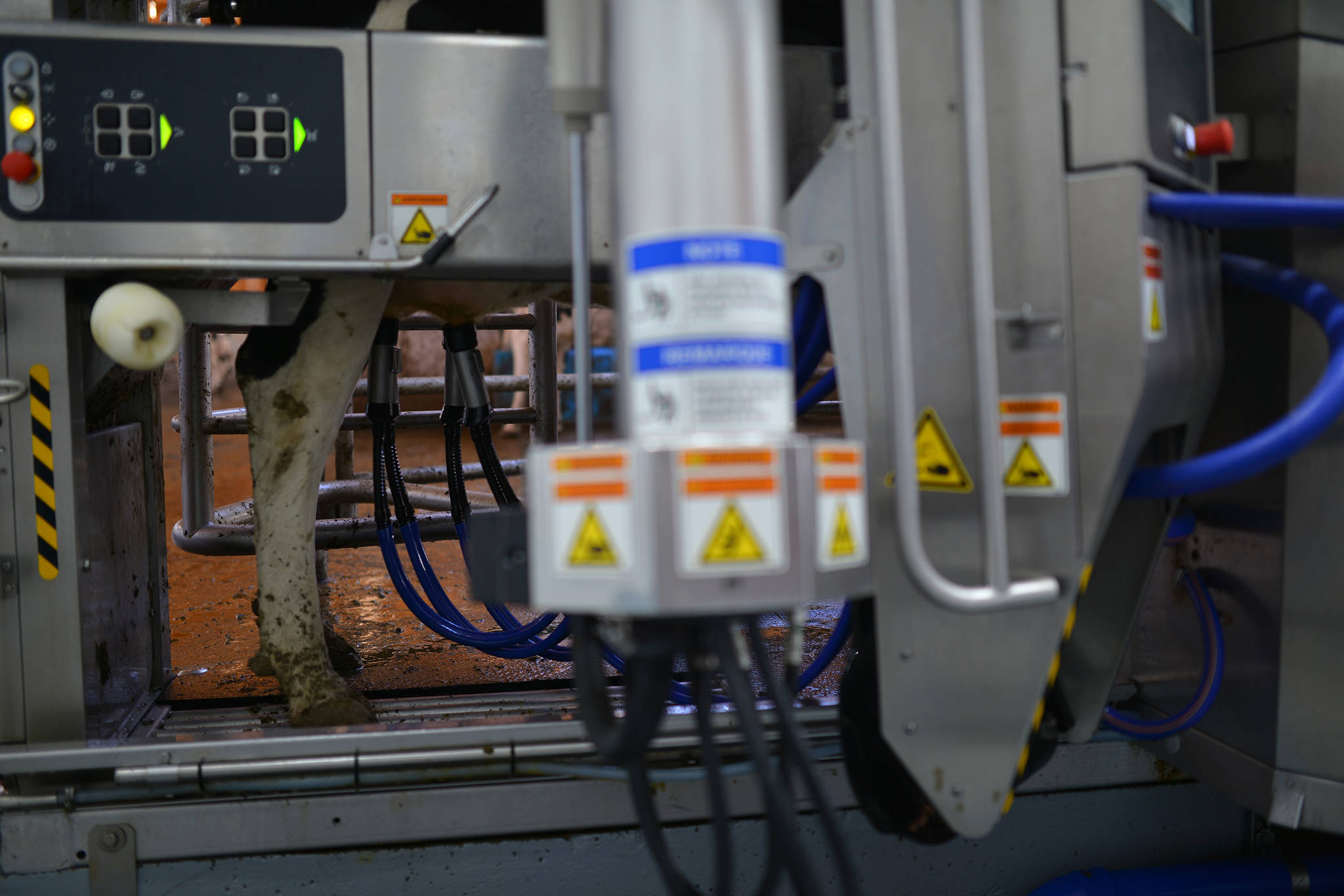 A DeLaval robotic milker has been installed at Tazo Farms in Falkland, among its many features being the ability to inform farmers of any health-related concerns identified during the milking process. The robot knows which cows have been milked, and prevents animals from being milked too often, or not enough. (Phil McLachlan - Black Press Media)