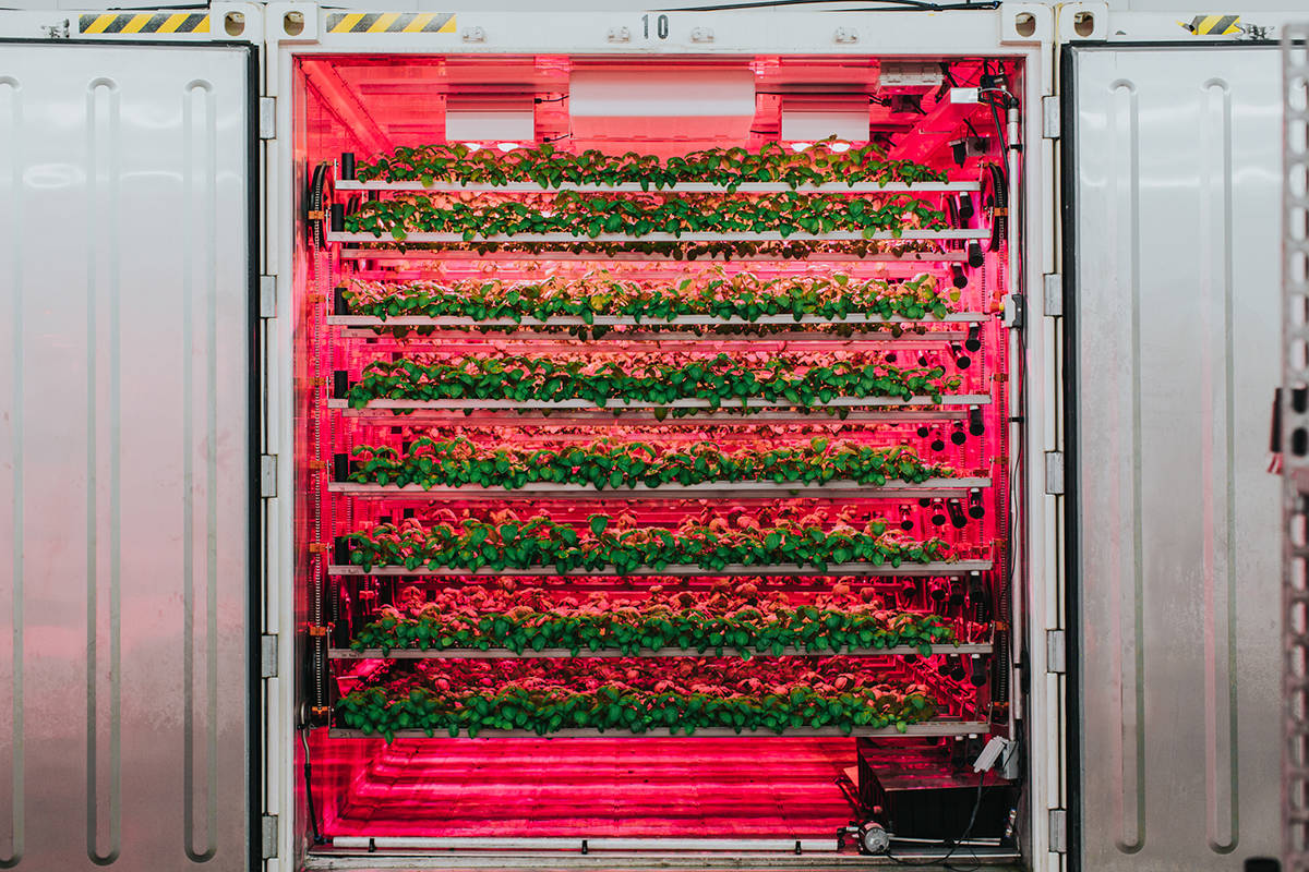 The CubicFarm System moves rows of leafy greens through a system calibrated to grow the perfect crop. (cubicfarms.com)