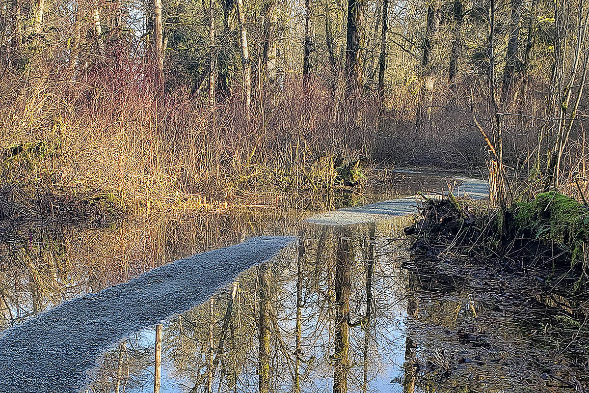 Jeff Laurie made a trip to Derby Reach Regional Park, following the recent flooding. He was most impressed with how the water on the trail offered some great reflections. (Special to Langley Advance Times)