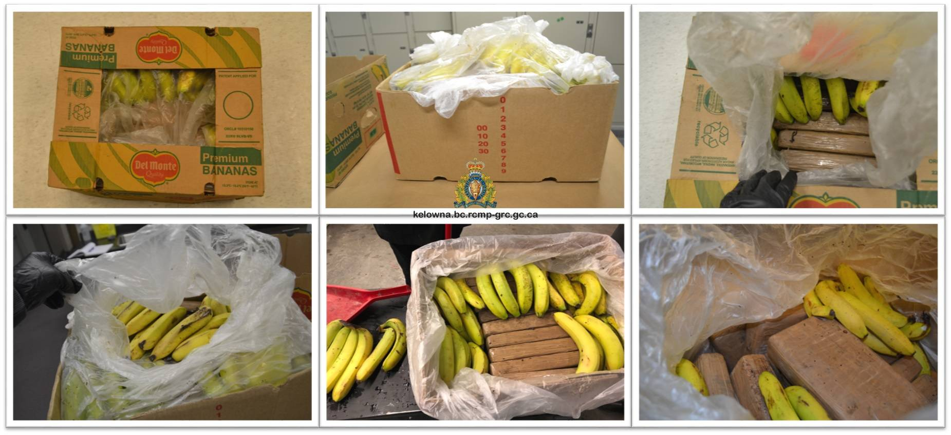 A collage of photos captured by investigators as they examined the banana boxes. (RCMP photo)