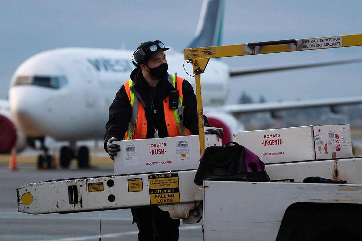 A ground worker wearing a face mask to curb the spread of COVID-19 unloads lobsters from a WestJet Airlines flight at Vancouver International Airport, in Richmond, B.C., on Thursday, January 21, 2021. THE CANADIAN PRESS/Darryl Dyck