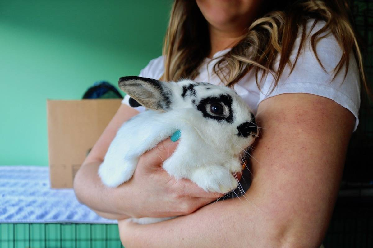 Sooke's Amy McLaughlin has rescued over 400 rabbits across the Island and parts of the mainland since late 2015. (Aaron Guillen/News Staff)