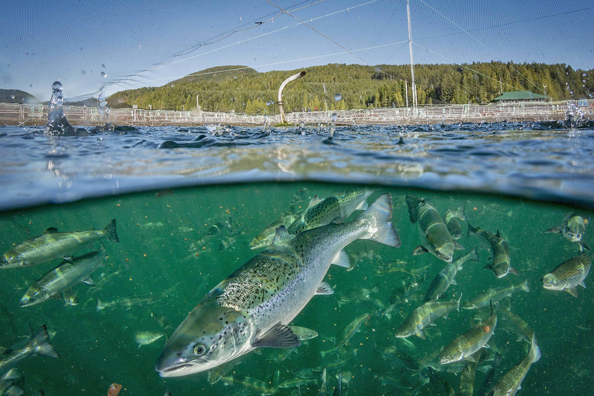 B.C. commercial fishers argue Canada's oceans can play an important role in a new and revitalized economy, but only if the first step is to restore their natural productivity. (Black Press file photo)