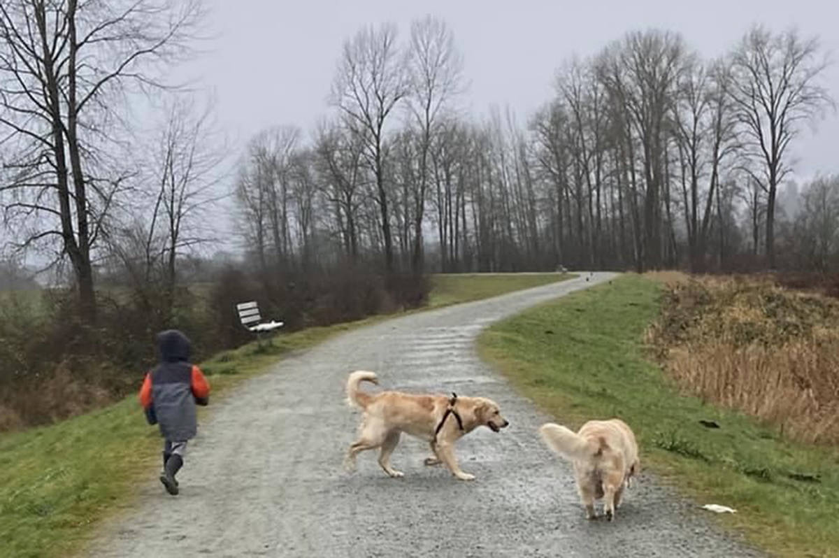 Zachary and his puppy buddies out for a weekly stroll on the Pitt Meadows dikes. (Special to The News)
