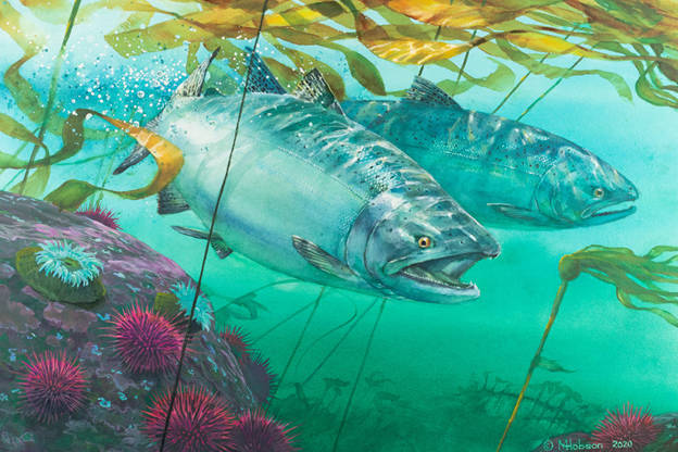 Mark Hobson's Chinook Salmon: Breaking Through won an annual competition this year to be featured on the 2021/2022 Salmon Conservation Stamp. The proceeds from the stamp are channeled to the Pacific Salmon Foundation for salmon conservation and enhancement projects. The spring round of funding is now open for community-based initiatives.