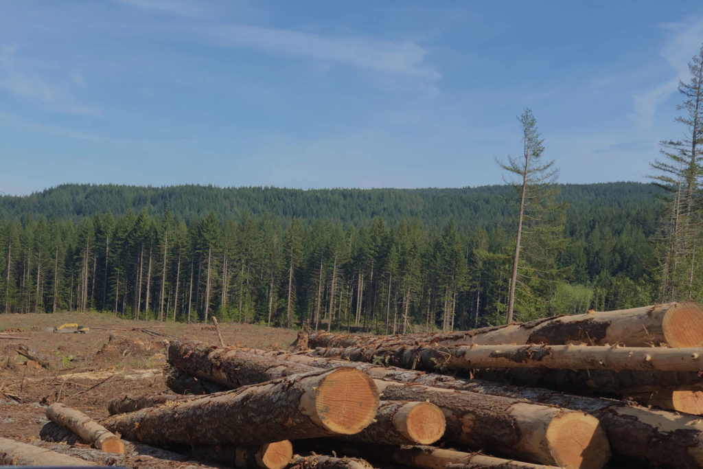 In a report released on Monday, Sierra Club BC said that majority of climate risks – including droughts, wildfires and landslides – are influenced by industrial logging. (Photo by Binny Paul/ Campbell River Mirror)