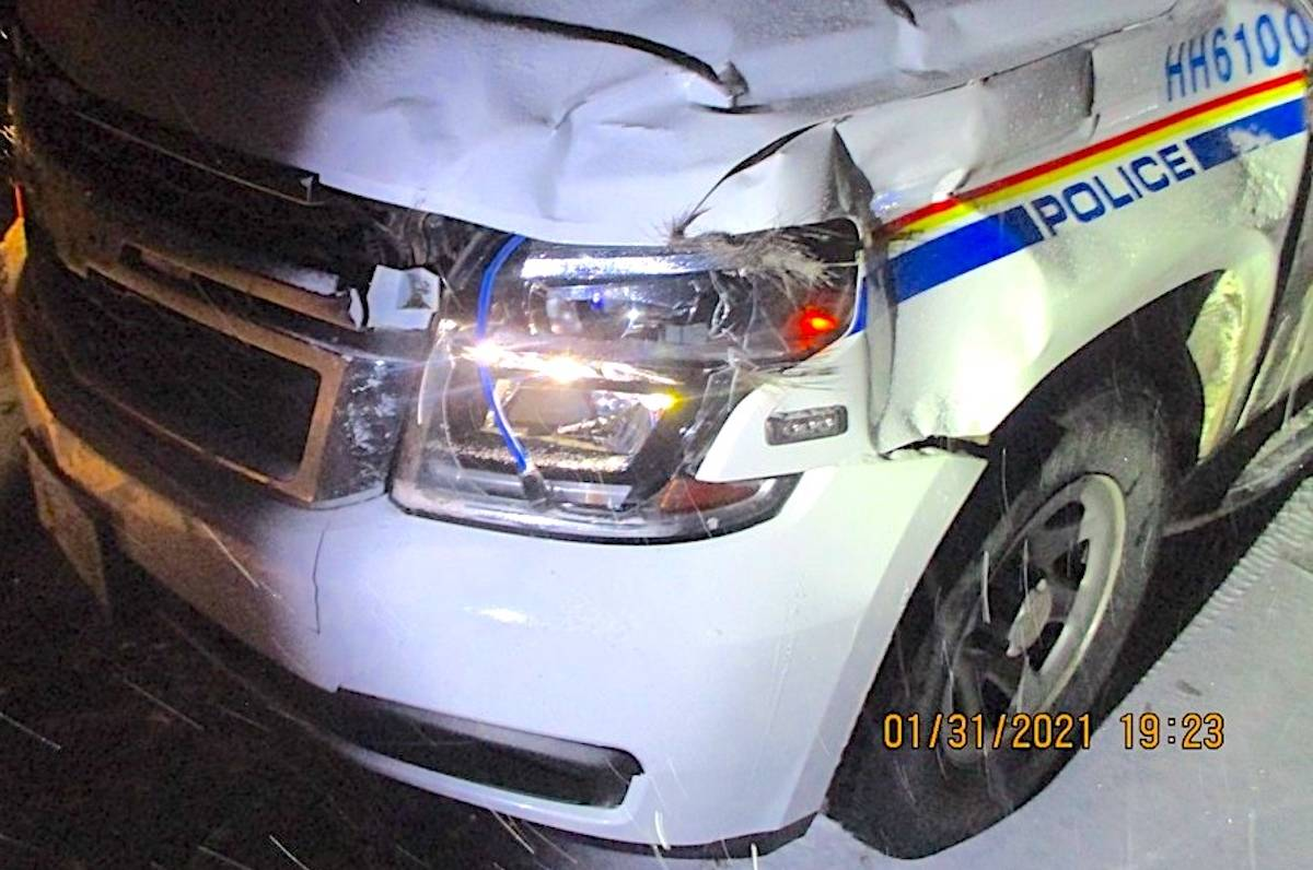 Cpl. Rob Gardner survived a collision with a moose Sunday, Jan. 31 in Northern B.C. (Hudson Hope RCMP)