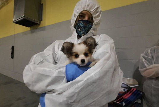 The BC SPCA and North Cowichan/Duncan RCMP seized 12 dogs from a breeder on Herd Road in North Cowichan on Tuesday, Feb. 2. (Submitted)