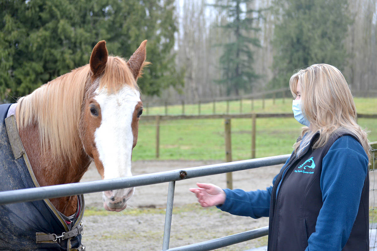 Valley Therapeutic Equestrian Association president Lynn Moseley visits the horses at the stables in Aldergrove. (Ryan Uytdewilligen/Aldergrove Star)