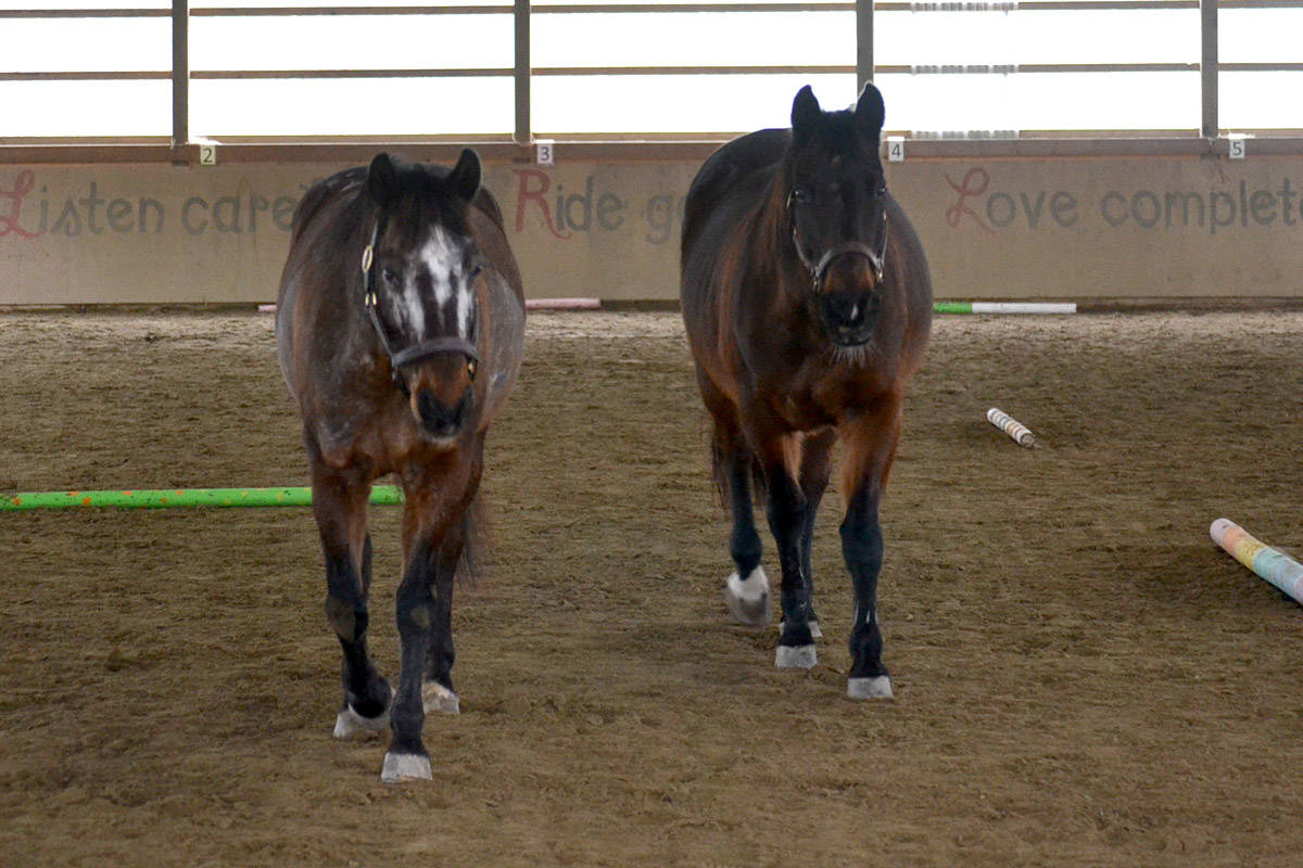 Horses at Valley Therapeutic Equestrian Association train and trot inside the ring. (Ryan Uytdewilligen/Aldergrove Star)
