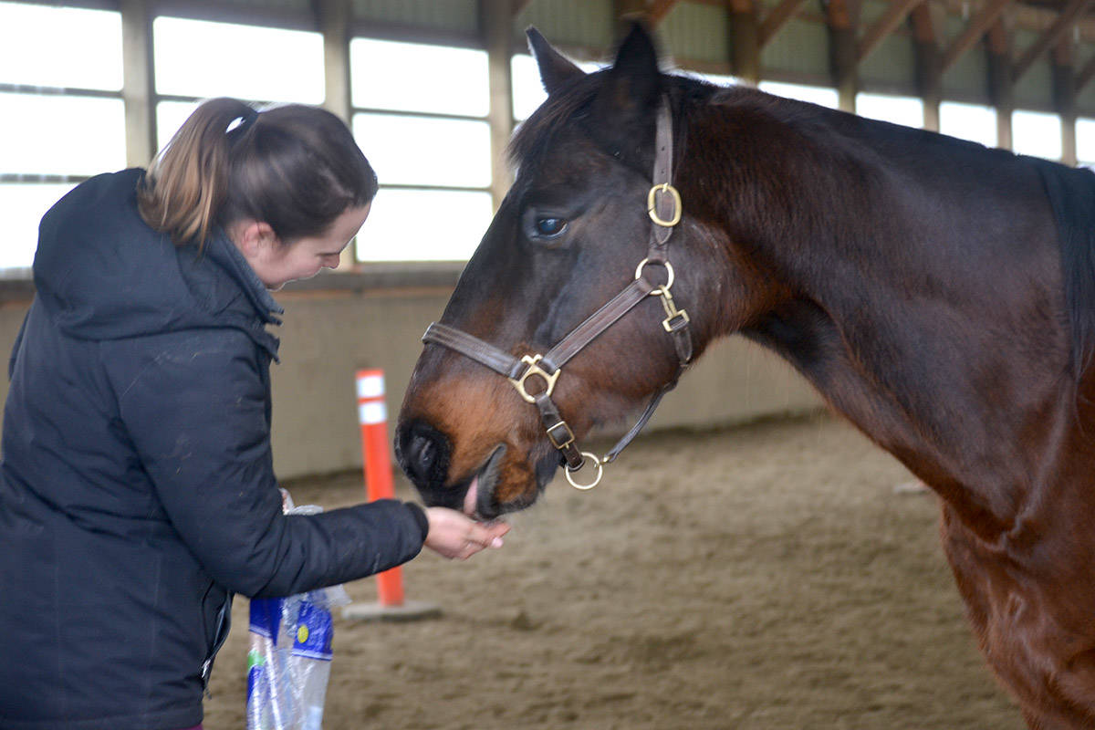 A volunteer at Valley Therapeutic Equestrian Association feeds one of the horses. (Ryan Uytdewilligen/Aldergrove Star)