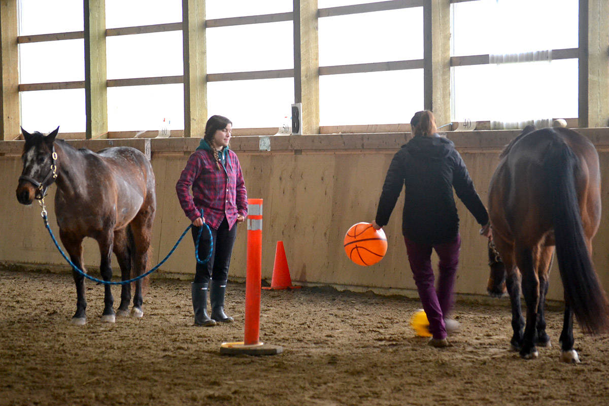 Horses at Valley Therapeutic Equestrian Association are exposed to sudden movements through special training using basketballs. (Ryan Uytdewilligen/Aldergrove Star)