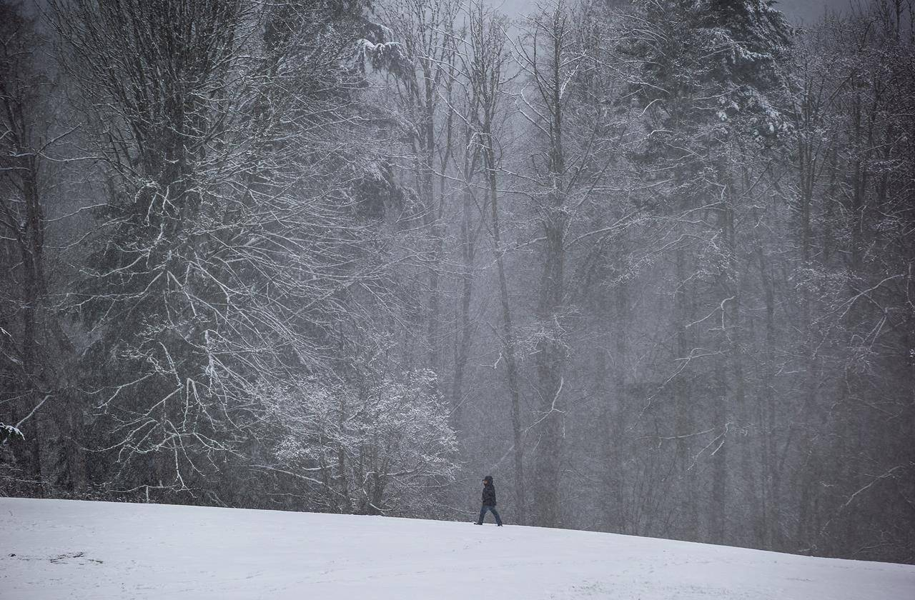 Snow falls as a person walks along a path at Burnaby Mountain Park, in Burnaby, B.C., on Sunday, January 24, 2021. THE CANADIAN PRESS/Darryl Dyck