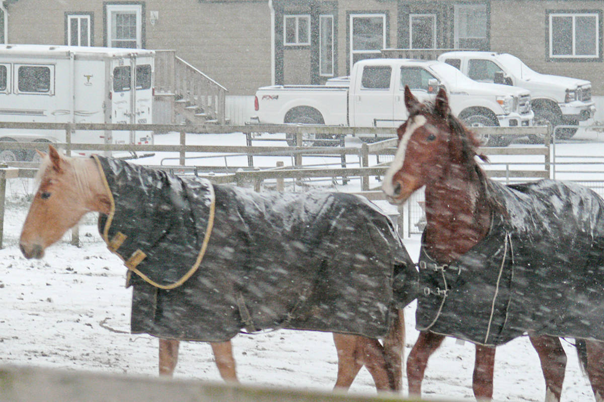 Snow blanketed Langley Saturday, Feb. 13 (Dan Ferguson/Langley Advance Times)
