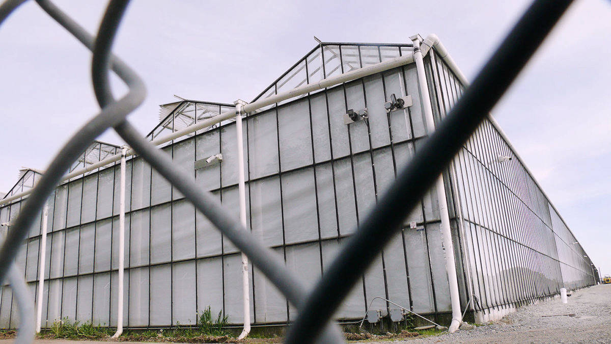 Canopy has sold its Aldergrove greenhouse (Langley Advance Times file)