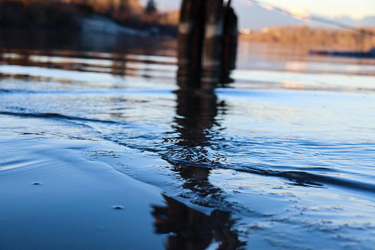Water reflections captivated Walnut Grove photographer Rebecca Harper, who snapped this short recently at the Brae Island Regional Park in Fort Langley. (Special to Langley Advance Times)