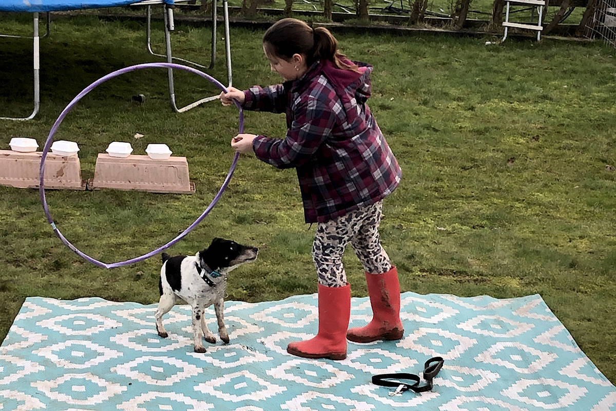 Members got creative training their dogs in their own backyards and homes and shared videos with other 4-H club members. (Special to The Star)