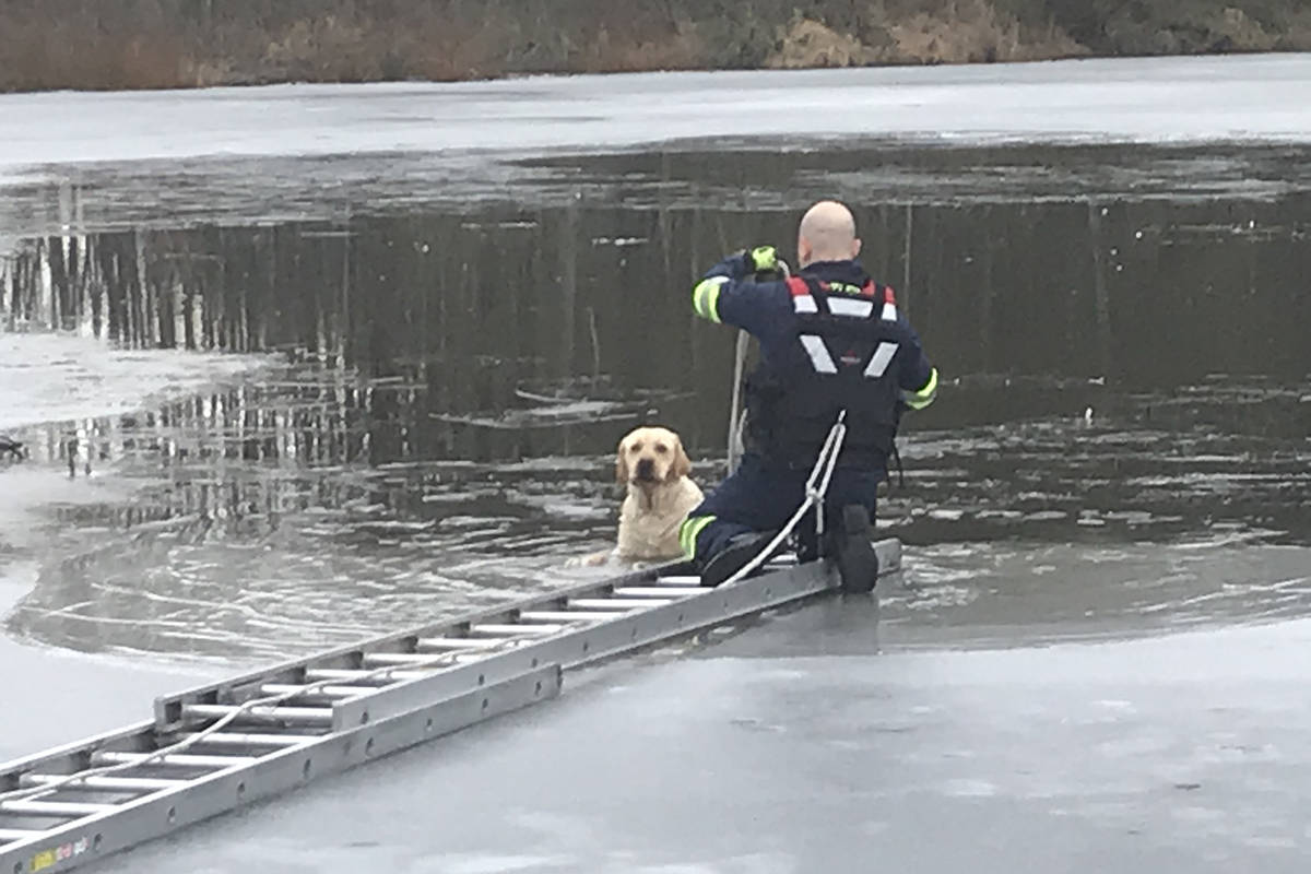 Township firefighters rescued a dog trapped on a lake in the area of 228 Street and 24 Avenue on Wednesday, Feb. 17 around 10 a.m. (Andy Hewitson/Special to Langley Advance Times)