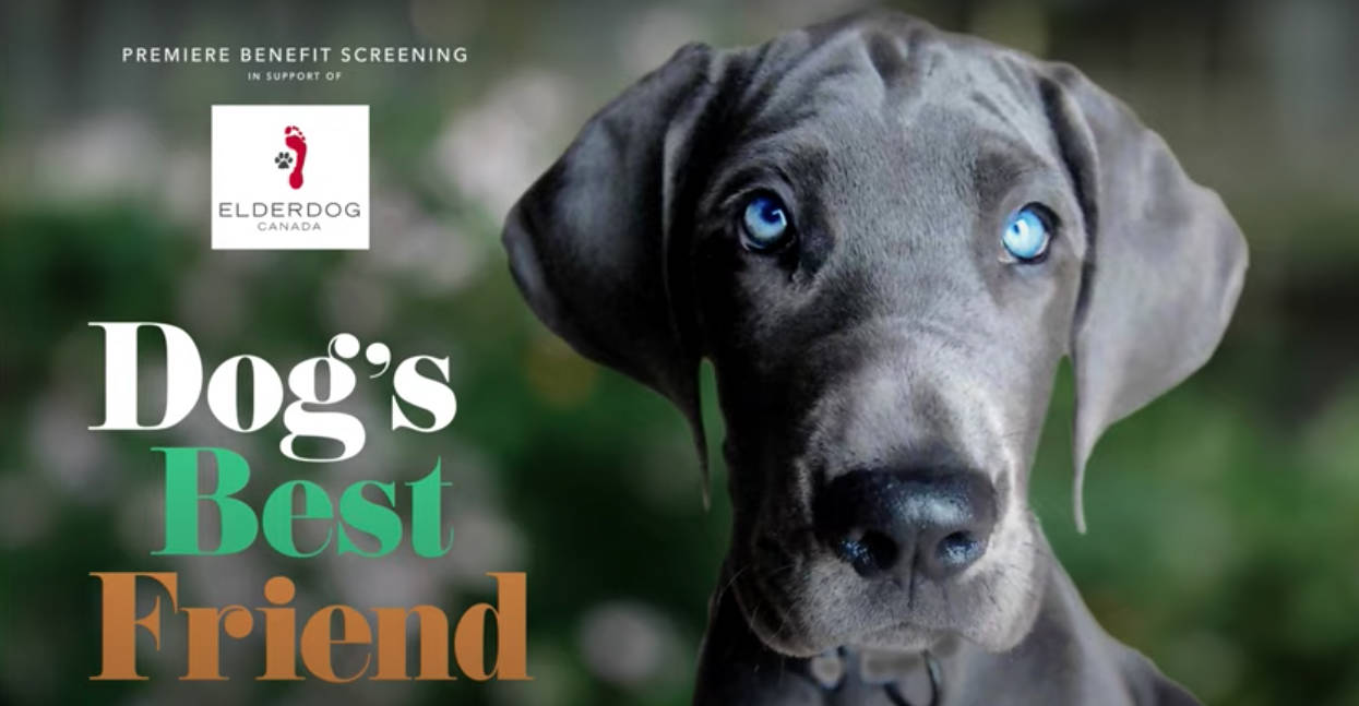 Dwight Storring of Kitchener, Ont. aired 'Dog's Best Friend' on YouTube at the end of January to bring awareness to the efforts made by ElderDog Canada. (screen grab)
