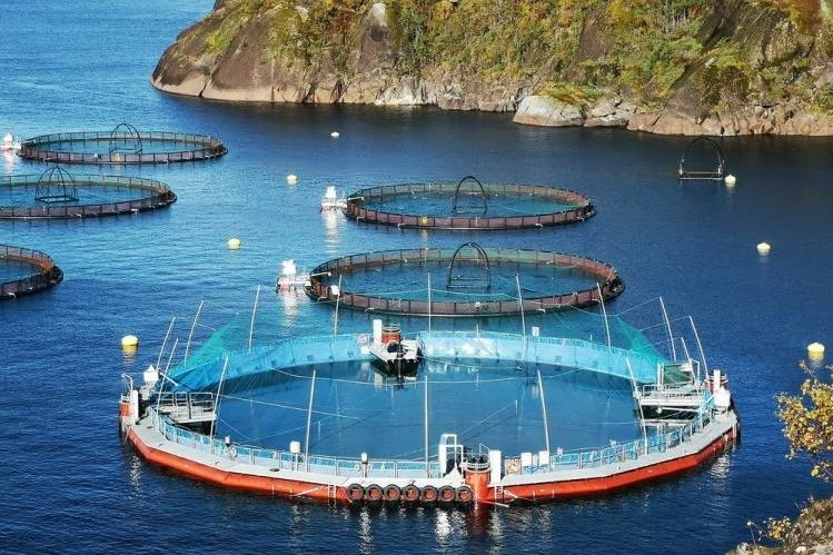 A Cermaq Semi-Closed Containment System is tested in Norway before its introduction to B.C. waters. The system is currently undergoing sea trials in B.C., as the federal government launches a series of roundtable discussions on transitioning open-net pens from B.C. waters. (Photo supplied by Cermaq Canada)