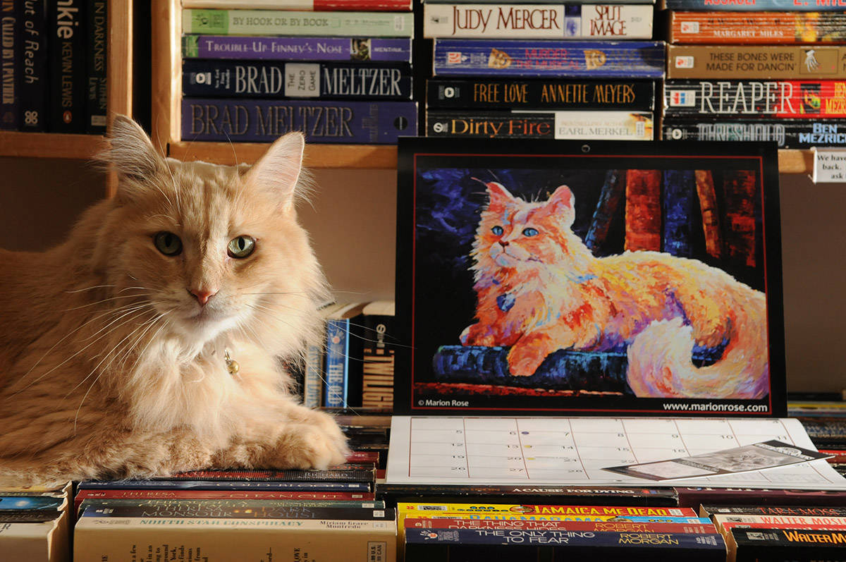 Nietzsche, the ginger cat who worked at The Book Man, poses for a photo on Dec. 5, 2011 promoting the first cat calendar fundraiser which featured all original artwork of him. He died on Monday, Feb. 22, 2021. (Jenna Hauck/ Chilliwack Progress file)