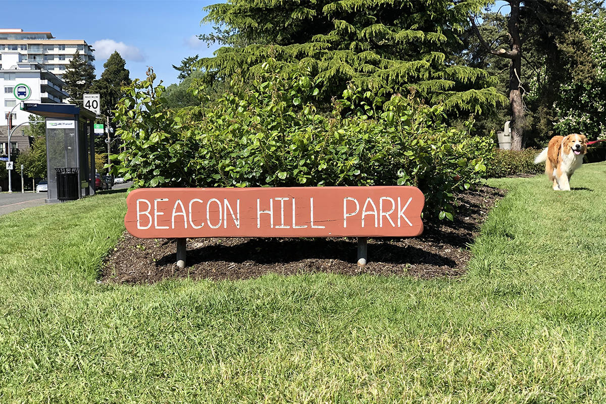 Victoria police arrested a man Tuesday after he reportedly smashed a sledgehammer into a bylaw officer's truck and fled into Beacon Hill Park on his bike. (Black Press Media file photo)