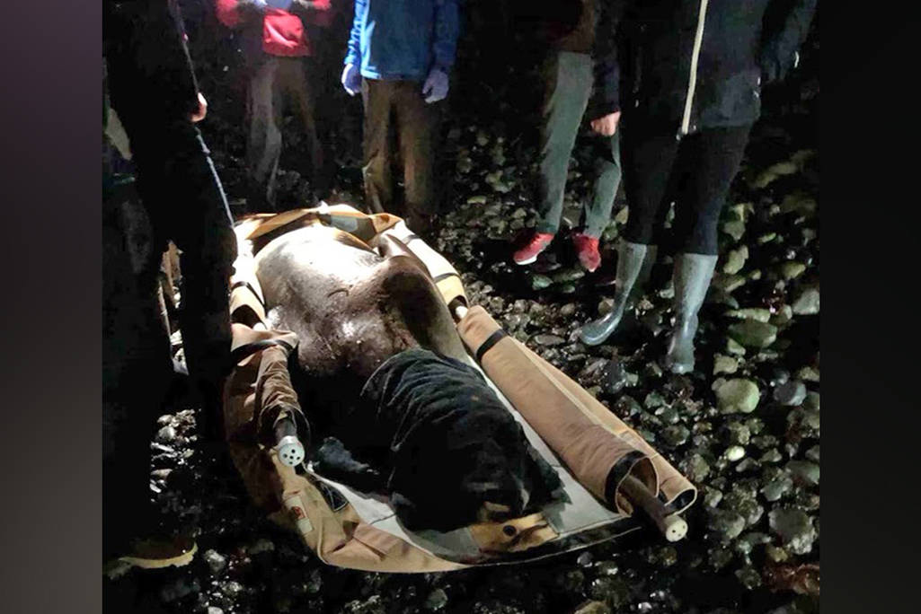 Staff from the Marine Mammal Rescue Centre, passersby, RCMP and Nanaimo Fire Rescue carried a sick 300-kilogram steller sea lion up the steep bluff at Invermere Beach in north Nanaimo in an attempt to save the animal's life Thursday. (Photo courtesy Marine Mammal Rescue Centre)