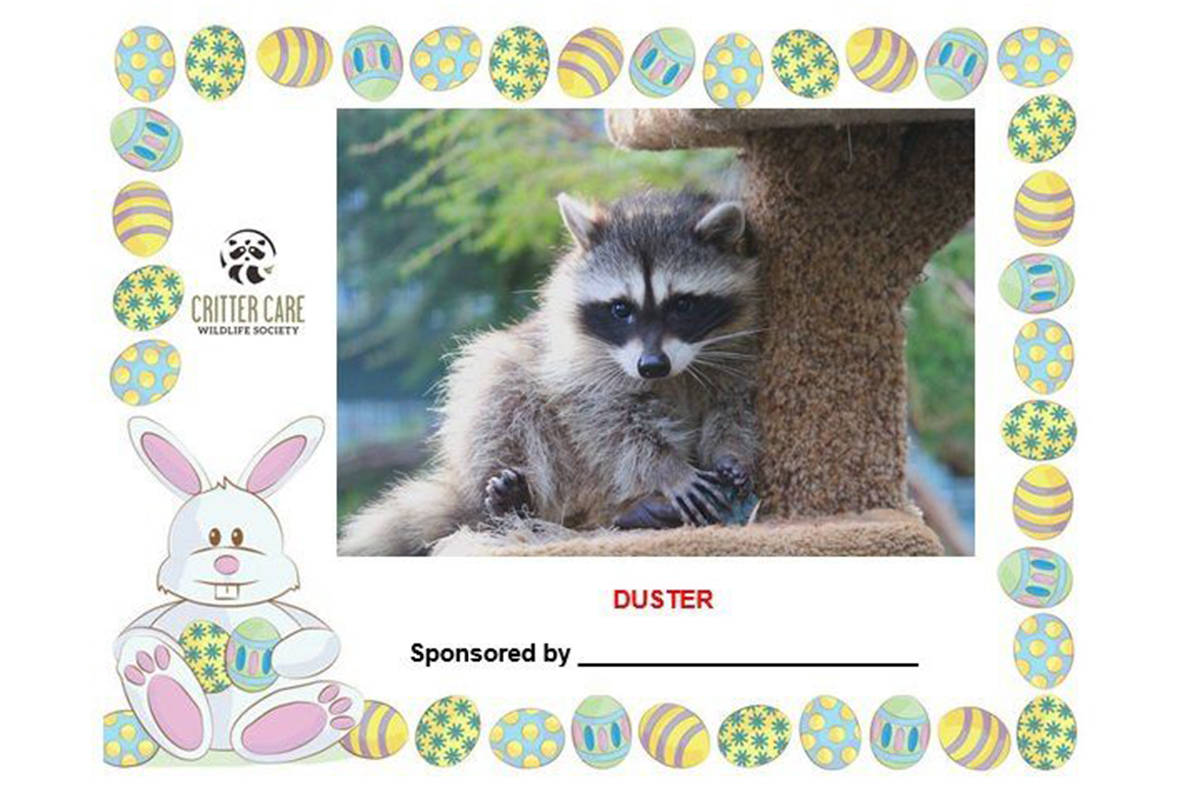 By formally adopting one or more of the new arrivals at Langley's Critter Care wildlife refuge, donors will receive a tax receipt for their charitable donation, and an certificate which contains a photo of their orphan (Critter Care)