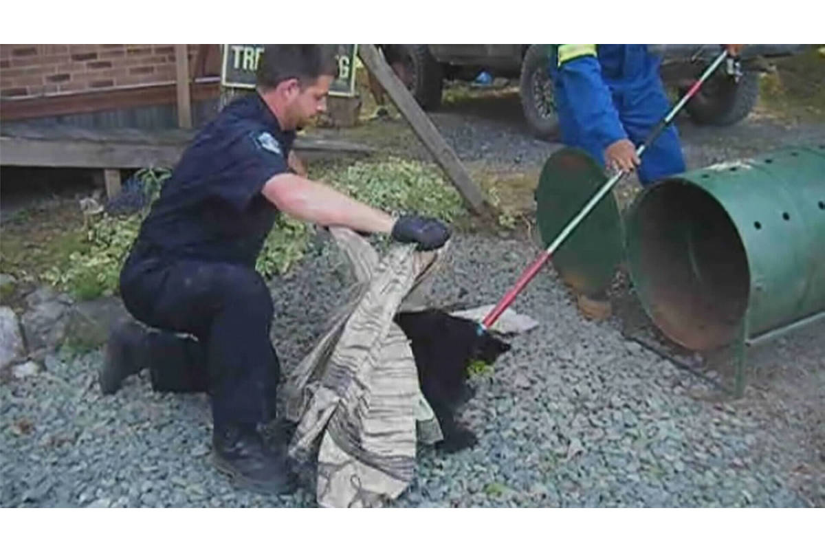 Conservation officer Bryce Casavant takes a cub to a rehabilitation organization on Vancouver Island. (Youtube screenshot)