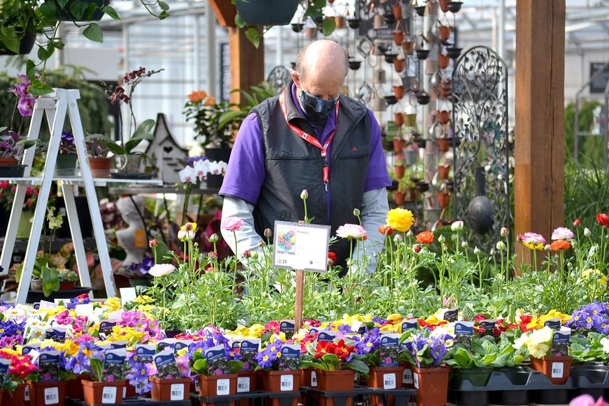 Walter Hoogeland gets ready for spring planting at Clearview Garden Shop. (Ryan Uytdewilligen/Aldergrove Star)