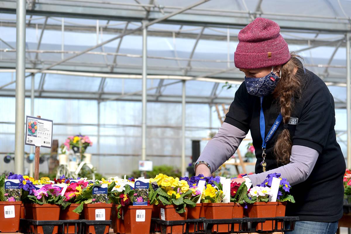 Monica Hodgeson gets ready for spring planting at Clearview Garden Shop. (Ryan Uytdewilligen/Aldergrove Star)