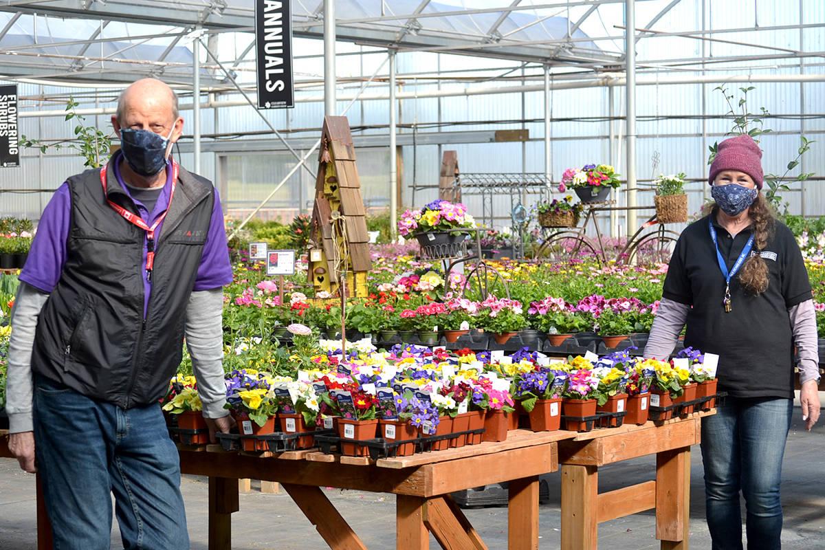 Walter Hoogeland and Monica Hodgeson get ready for spring planting at Clearview Garden Shop. (Ryan Uytdewilligen/Aldergrove Star)