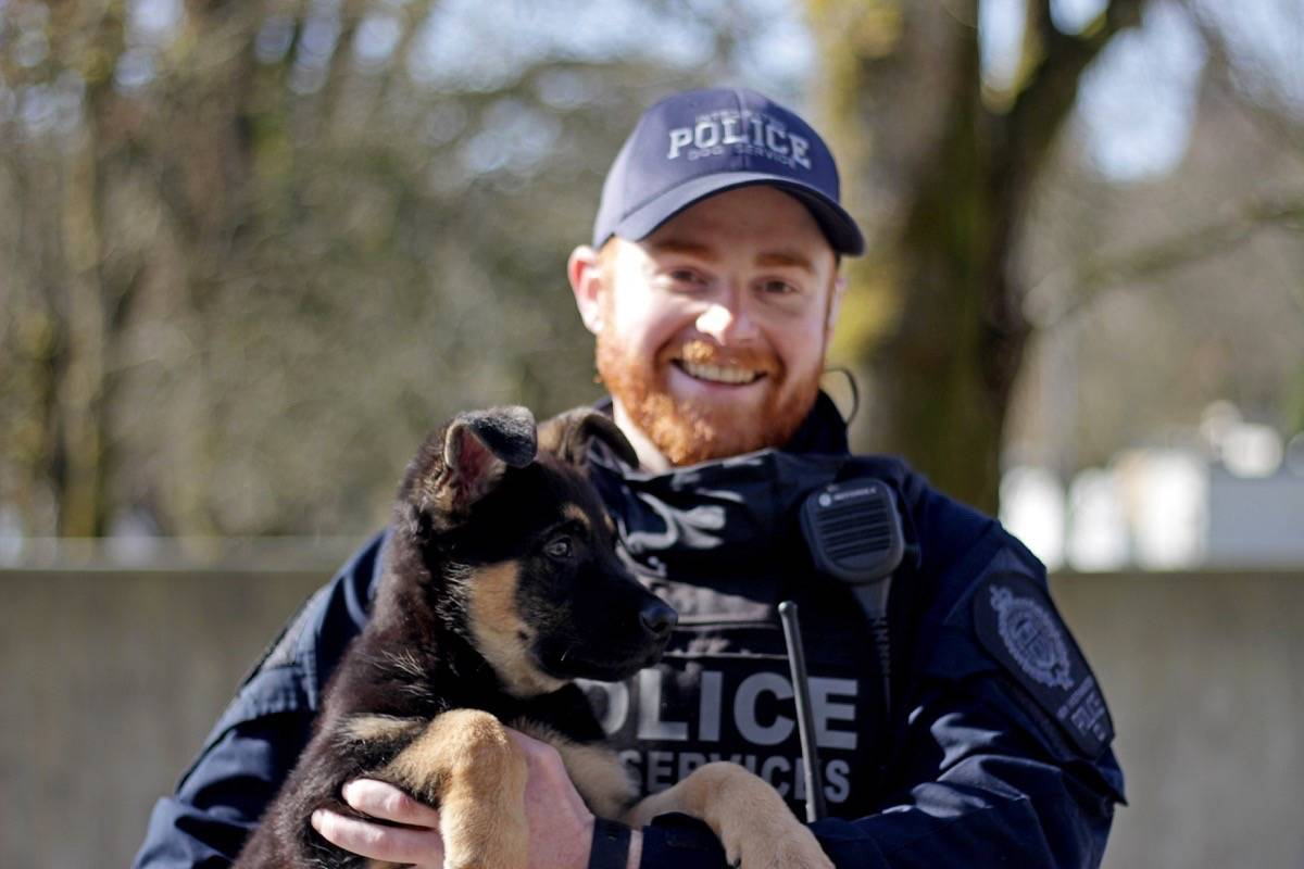 At provincial headquarters in Surrey, a puppy meet-and-greet for news media Thursday (March 11) was part of the RCMP's 2021 Name the Puppy contest. Pictured is Constable Ross Findlay and Pirate. (Photo: Lauren Collins)