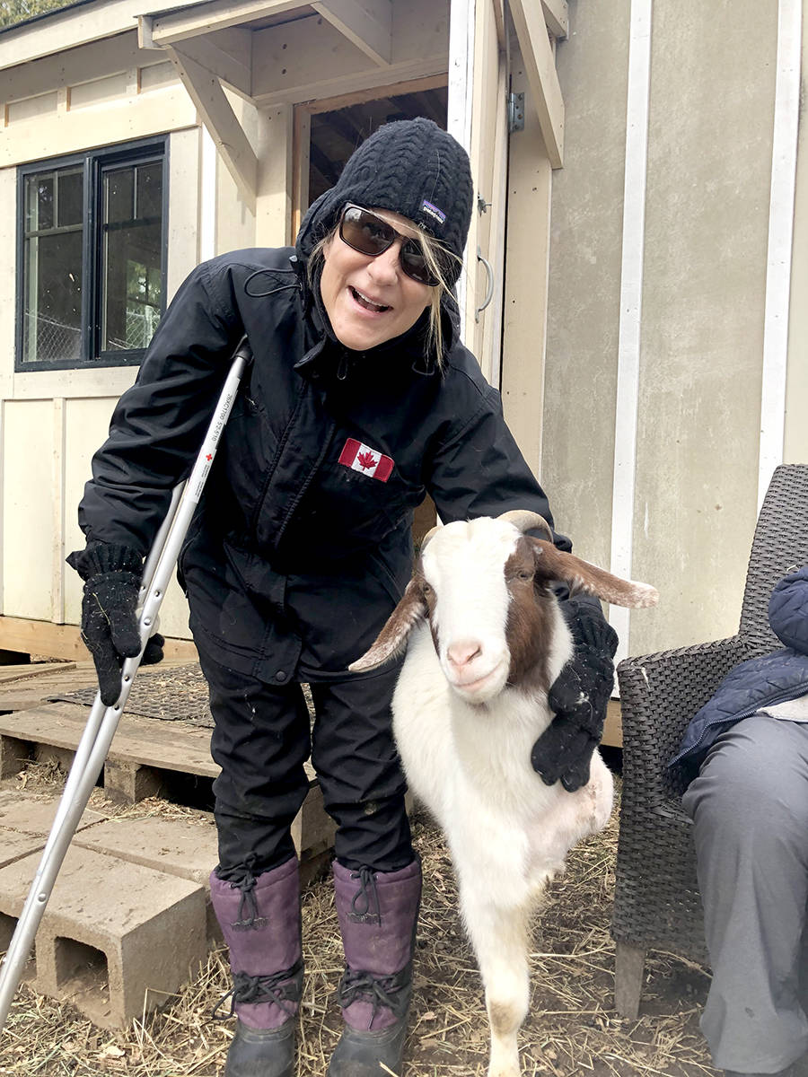 Gibbles the goat, a resident at the Happy Herd Animal Sanctuary in Aldergrove, is living life after having one leg amputated. He's bringing hope to volunteer, Mari, who just had hip surgery. (Special to The Star)