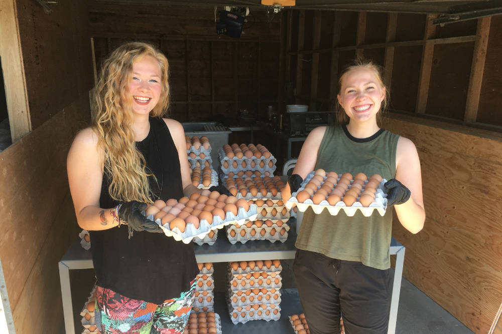 Order eggs and other tasty farm products from local growers through DirectFood.store and they'll be delivered to your home three days a week!
