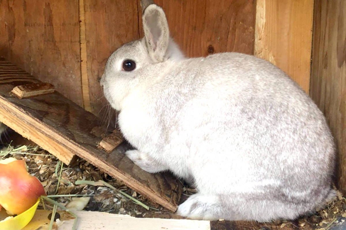 Baby bunny at Kensington Prairie Farm. (Special to The Star)