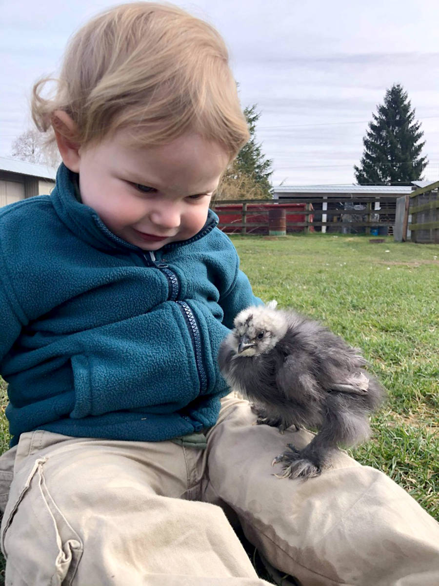 Porter Milton plays with the chicks at Kensington Prairie Farm. (Special to The Star)