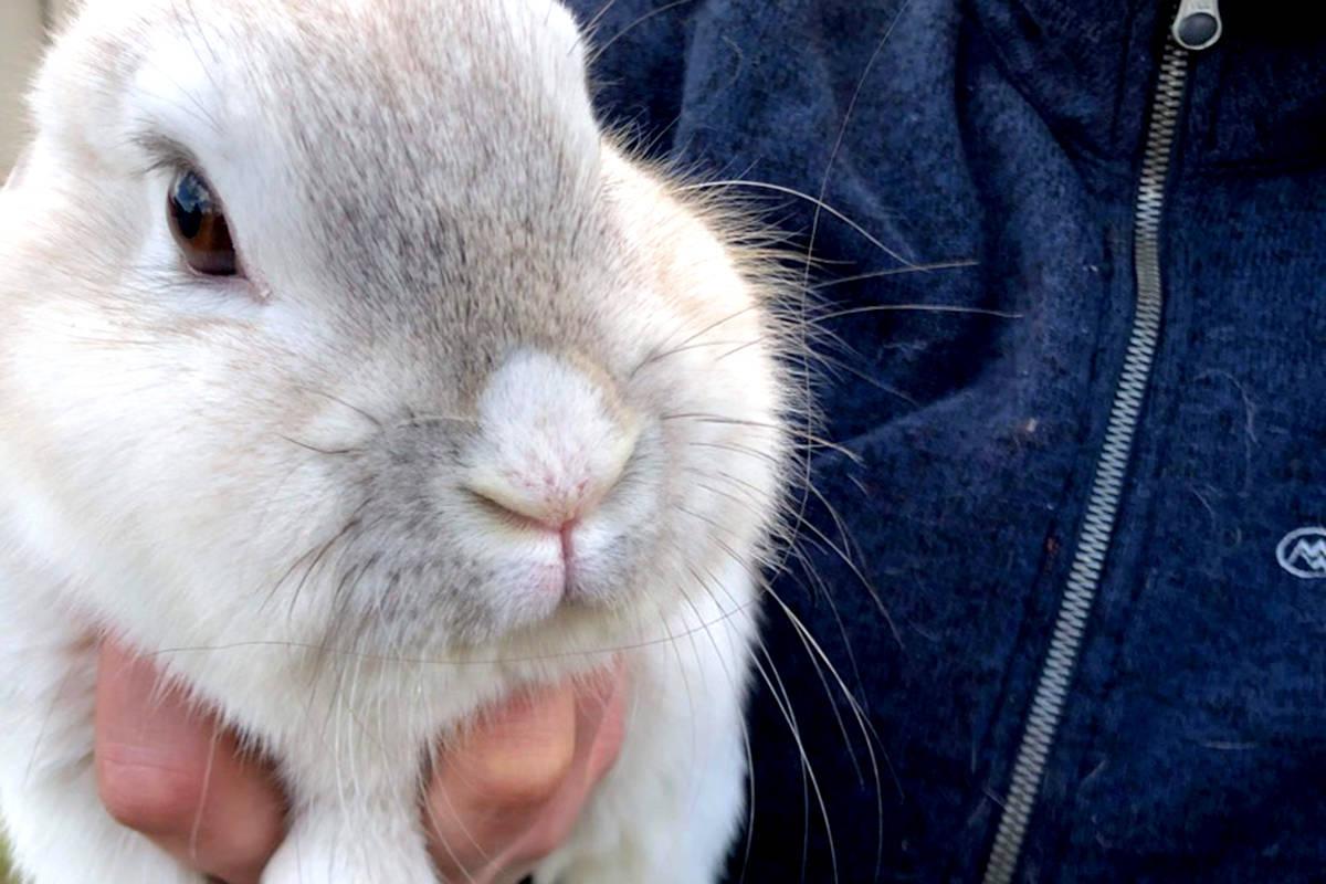Bunny at Kensington Prairie Farm. (Special to The Star)