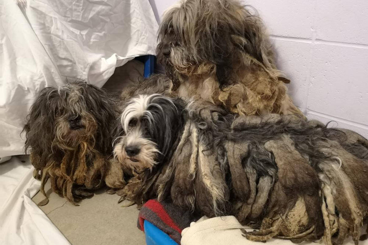 The BC SPCA is appealing for donation to help care for 119 dogs recently surrendered in northern B.C. (BC SPCA)