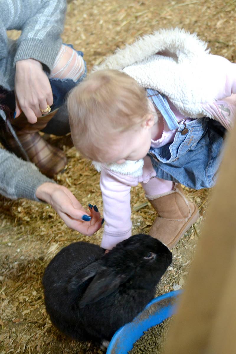 Children get to interact with animals at Aldor Acres. (Ryan Uytdewilligen/Langley Advance Times)