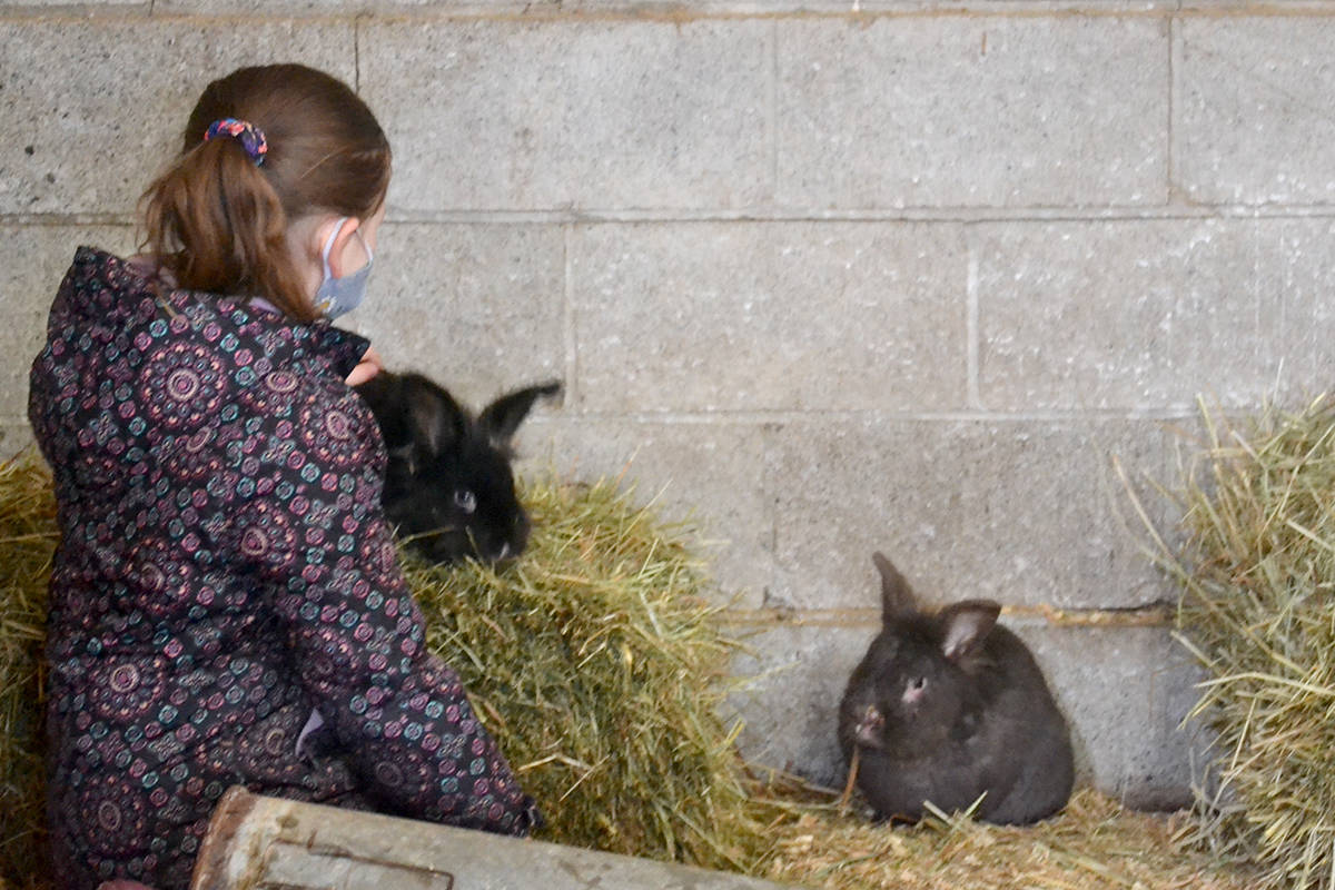 Eight-year-old Grace meets a bunny at Aldor Acres. (Ryan Uytdewilligen/Langley Advance Times)