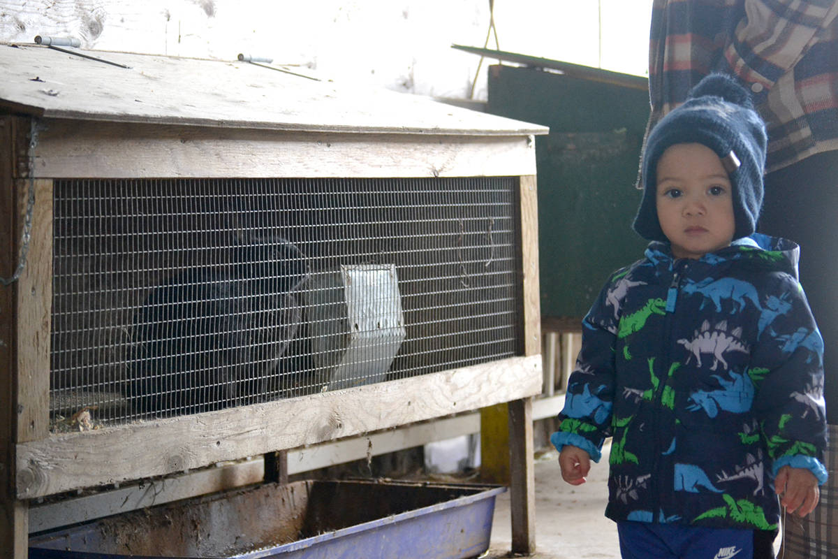 Three-year-old Tristan meets a bunny at Aldor Acres. (Ryan Uytdewilligen/Langley Advance Times)
