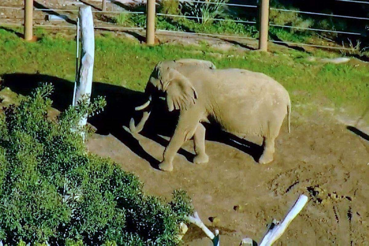 Jose Navarrete, 25, allegedly trespassed into the San Diego Zoo's elephant habitat while carrying his 2-year-old daughter. (Screengrab/Live cam)