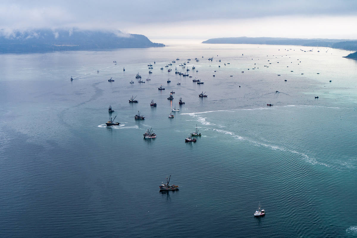 Seiners fill the waters between Comox and Nanoose Bay during roe herring fishery. File photo, Pacific Wild