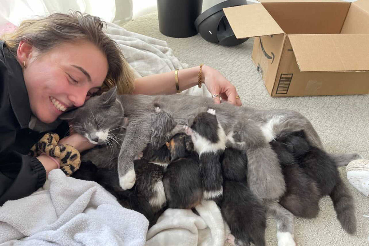 Natalie West is ecstatic that her cat Mittens has back all five of her kittens, which were stolen from their home early Tuesday morning (March 30). The family has also temporarily adopted an additional five. (Photo: Jacques West)