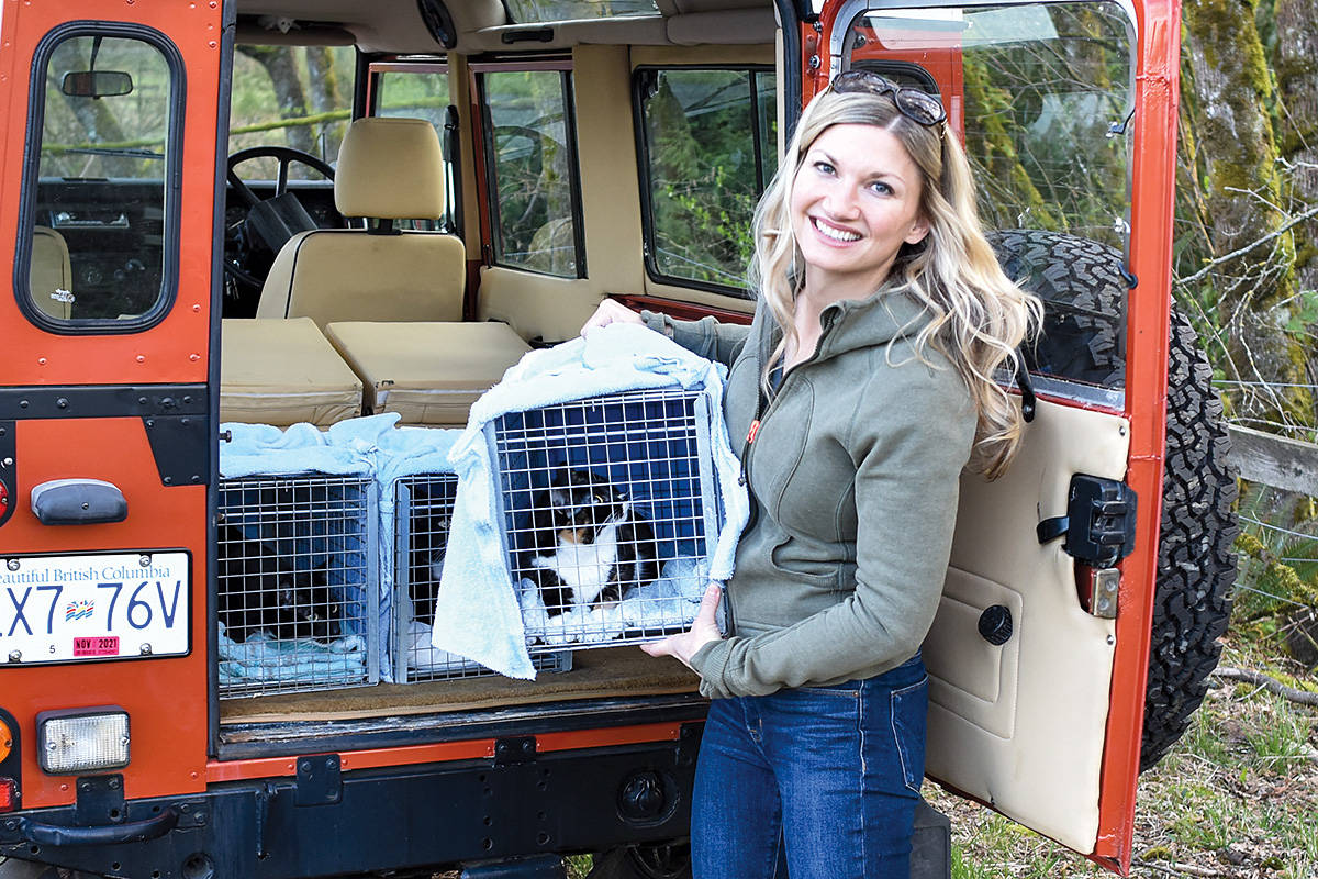 Shelly Roche of TinyKittens with some of the cats caught for trap-neuter-release programs at local cat colonies. (TinyKittens/Special to the Langley Advance Times)