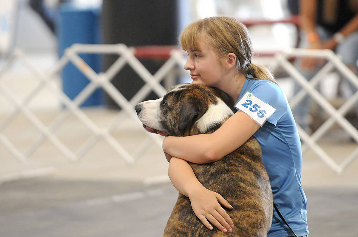 A girl wraps her arms around her dog during a 4-H event at the 147th annual Chilliwack Fair on Aug. 10, 2019. Saturday, April 10, 2021 is Hug Your Dog Day. (Jenna Hauck/ Chilliwack Progress)