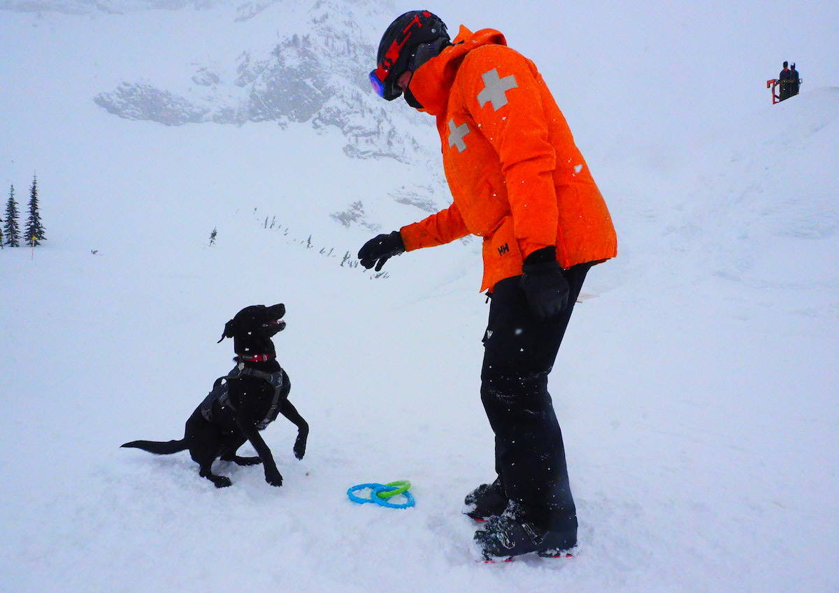 Dogs on duty: Avalanche rescue dog in training Sadie (above) learning about obedience with her owner and handler, Steve Morrison at the Fernie Alpine Resort, and Drift (right) who is FAR's newest CARDA-certified dog. More pictures, story on page 8.