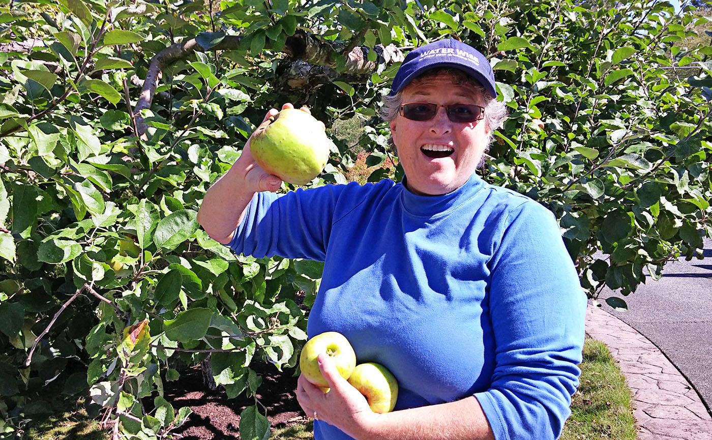 Meg Jordan of LEPS harvested fruit during the 2016 Langley Community Harvest. (LEPS)